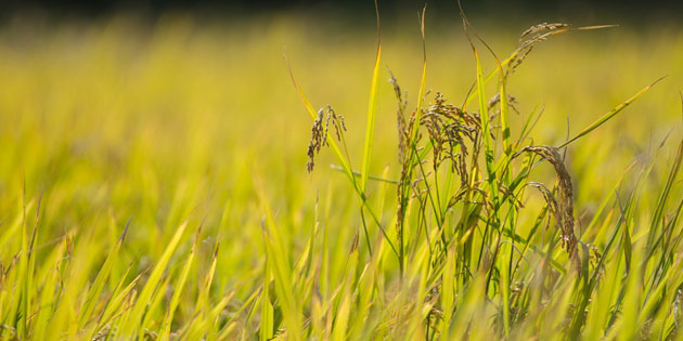 why-some-farmers-say-no-to-cover-crops
