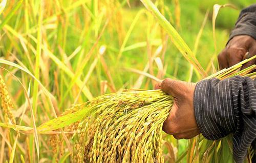 Farming and Farm Income